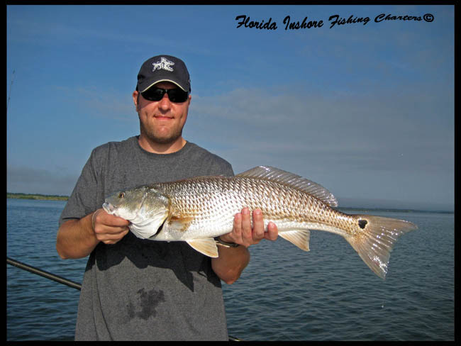 Indian river seatrout florida trout fishing pictures for Saltwater drum fish