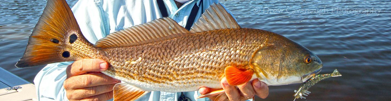 February 1st 2013 orlando inshore saltwater fishing report for Saltwater fishing orlando