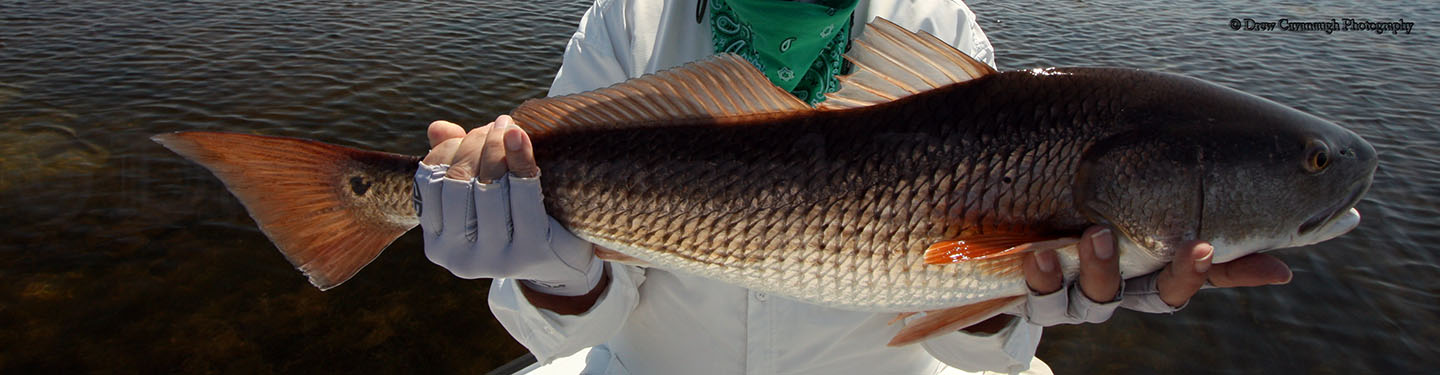 March 12th 2012 central florida saltwater fishing report for Florida saltwater fishing