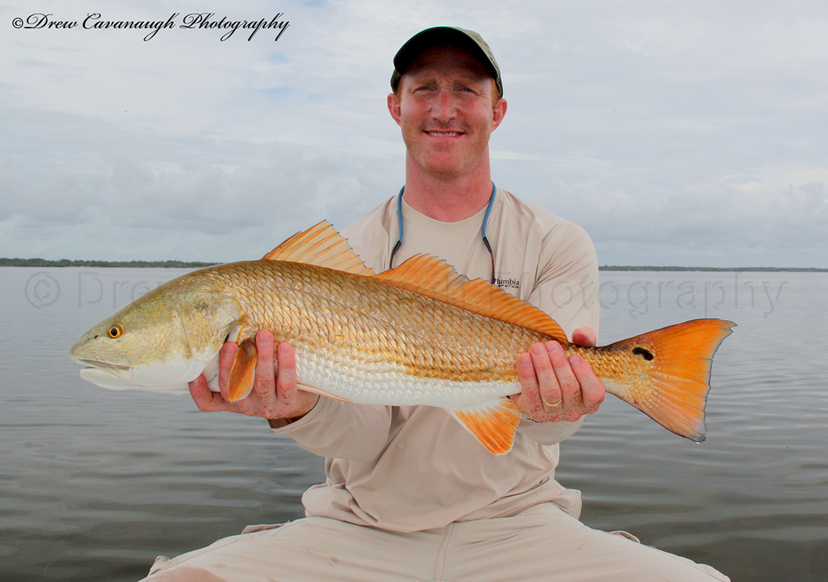 Titusville redfish pictures mosquito lagoon fish for Red fish pictures