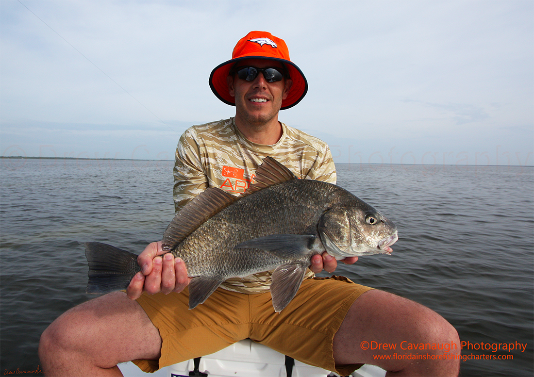 Mosquito lagoon black drum indian river black drum for Charter fishing sebastian fl