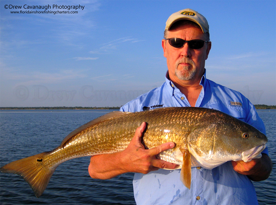 Titusville redfish pictures mosquito lagoon fish for Banana river fishing