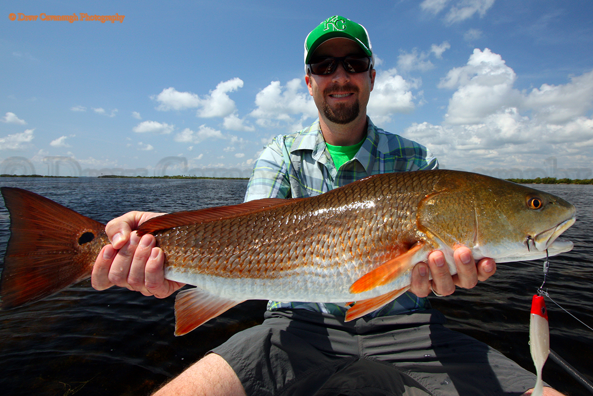 Mosquito lagoon redfish orlando redfish florida red drum for Red drum fishing rigs