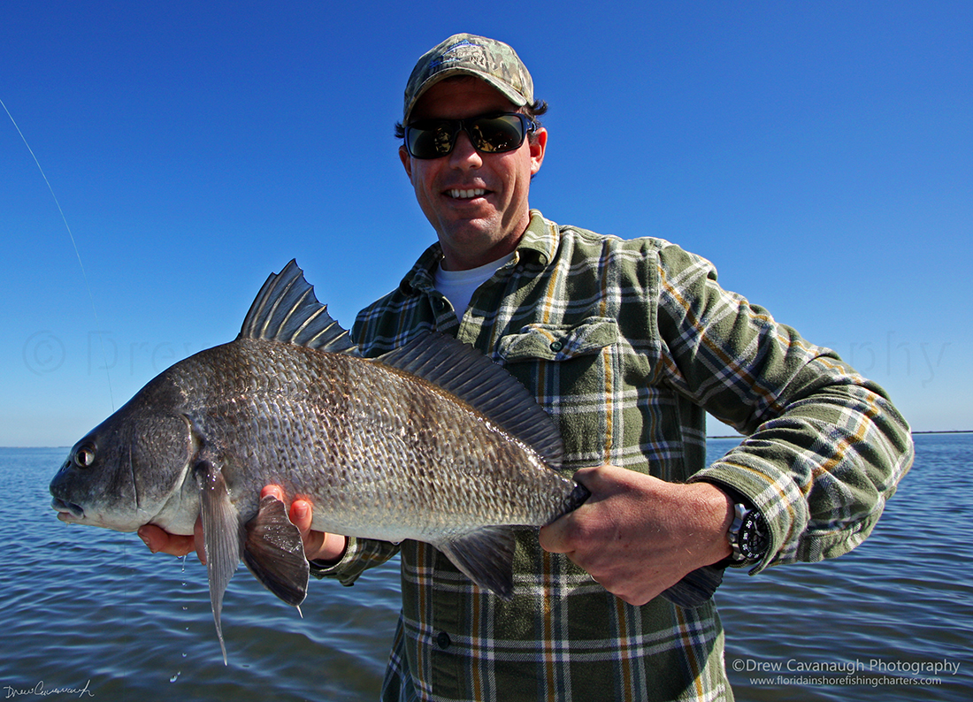 Mosquito lagoon black drum indian river black drum for Saltwater fishing in florida
