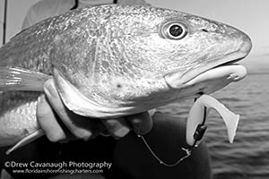 Central Florida Redfish Charters