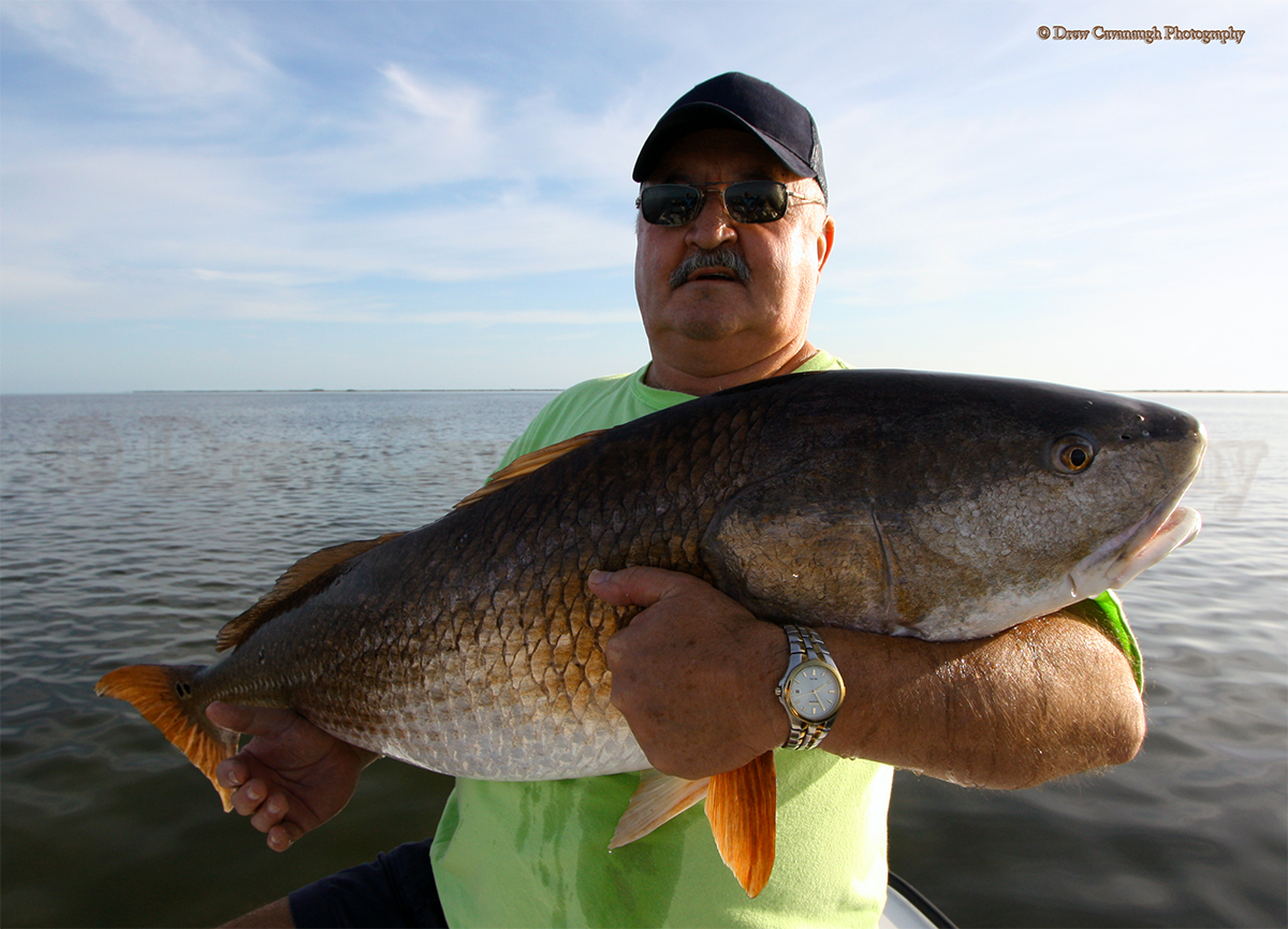 Mosquito lagoon redfish orlando redfish florida red drum for Red saltwater fish