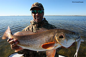 Florida Winter Redfish