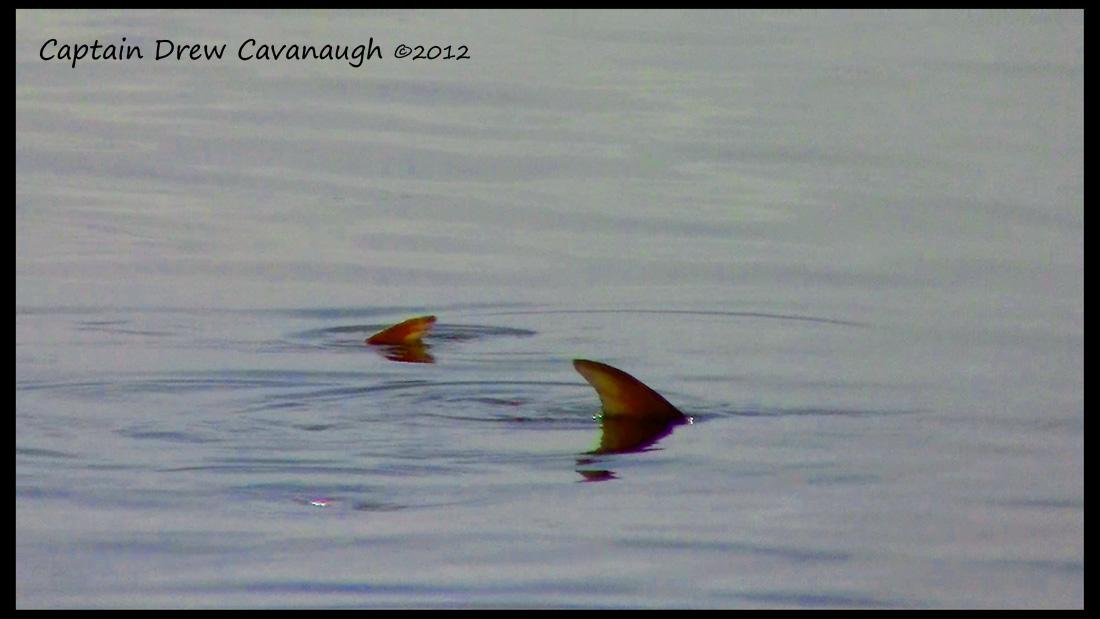 New smyrna beach fishing report november 2012 for New smyrna beach fishing report